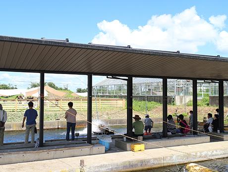 釣り堀(手賀沼フィッシングセンター) | OKUTEGA-TOURISM 奥手賀 ...